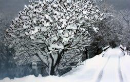 Zima krajobraz Fotografia Stock