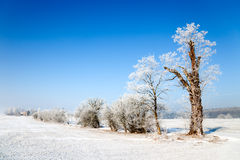 Zima krajobraz Obrazy Royalty Free