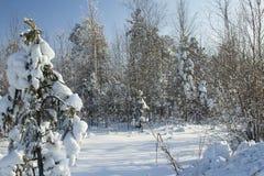 Zima krajobraz. Fotografia Stock
