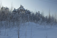 Zima krajobraz. Obrazy Royalty Free