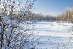 Zima krajobraz. Zdjęcia Stock