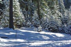 Zima krajobraz 7 Zdjęcia Royalty Free