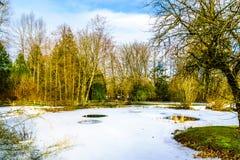 Zima krajobraz częsciowo marznący staw w Campbell doliny parku Obraz Stock