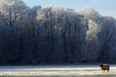 Zima krajobraz: drzewa i cakiel Obrazy Stock