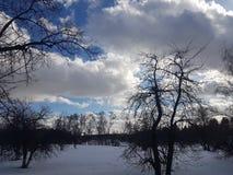 Zima krajobraz, drzewa w śniegu przeciw niebieskiemu niebu w chmurach fotografia royalty free