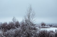 Zima krajobraz drzewny pozować fotografia royalty free