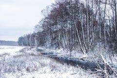 Zima krajobraz: las i las w śniegu fotografia royalty free