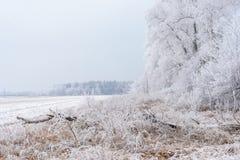 Zima krajobraz, marznący drzewa Zdjęcia Royalty Free