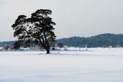 Zima krajobraz na zachodnim wybrzeżu w Szwecja obraz stock