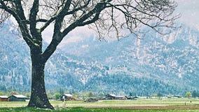 Zima krajobraz: nagi dębowy drzewo w snowfield podczas ciężkiego opadu śniegu Świeżej zielonej trawy pokrywy ciężki snowing Góry zbiory wideo