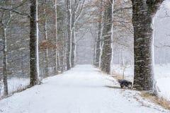 Zima krajobraz przy śnieżycą Obraz Royalty Free