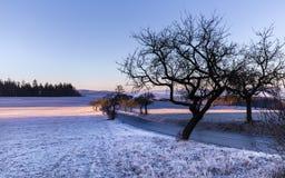 Zima krajobraz przy wschodem słońca i sylwetką drzewa Fotografia Stock