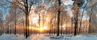 Zima krajobraz przy zmierzchem w lesie Obraz Stock