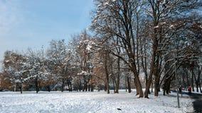 Zima krajobraz South Park z śniegiem zakrywał drzewa w mieście Sofia obrazy royalty free