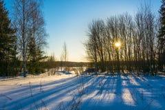 Zima krajobraz w backlight Obraz Stock