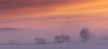 Zima krajobraz w czerwieni i menchii brzmieniach Zdjęcia Stock