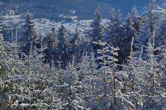 Zima krajobraz w górach 7 Zdjęcie Stock