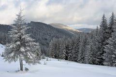 Zima krajobraz w Karpackich górach Fotografia Royalty Free