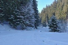 Zima krajobraz w lesie Zdjęcie Stock