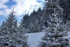 Zima krajobraz w lesie 2 Zdjęcie Royalty Free