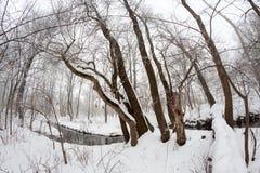 Zima krajobraz w parku Obraz Royalty Free