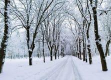 Zima krajobraz w parku Zdjęcia Stock