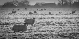Zima krajobraz w wsi obrazy royalty free