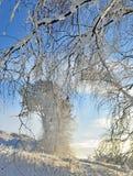 Zima krajobraz z śnieżystym drzewem Fotografia Stock