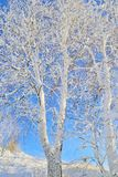 Zima krajobraz z śnieżystym drzewem Obrazy Stock