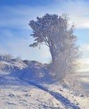 Zima krajobraz z śnieżystym drzewem Obraz Stock