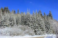 Zima krajobraz z śnieg zakrywającymi drzewami Obrazy Stock