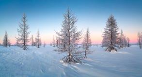 Zima krajobraz z śnieg zakrywającymi drzewami Zdjęcia Stock