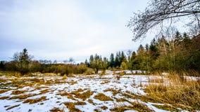 Zima krajobraz z śniegi zakrywającymi traw polami w Campbell doliny parku Obraz Royalty Free