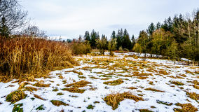 Zima krajobraz z śniegi zakrywającymi traw polami w Campbell doliny parku Zdjęcie Royalty Free