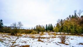 Zima krajobraz z śniegi zakrywającymi traw polami w Campbell doliny parku Obrazy Royalty Free