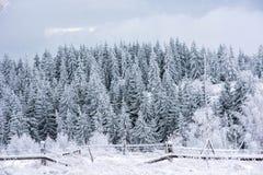 Zima krajobraz z śniegiem na drzewach zdjęcia royalty free