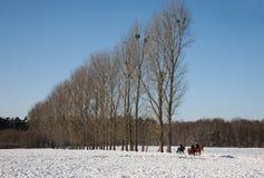 Zima krajobraz z drzewami z rzędu Fotografia Stock