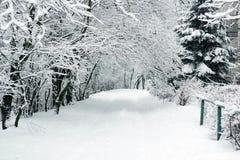 Zima krajobraz z drzewami zakrywającymi z śniegiem obraz royalty free