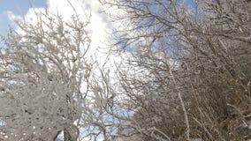 Zima krajobraz z drzewami zakrywającymi śniegiem zbiory