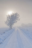 Zima krajobraz z drzewo śniegiem zawijającym i drogą Obraz Royalty Free