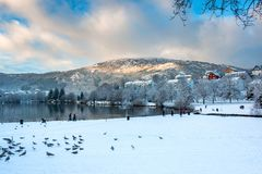 Zima krajobraz z Dzikimi ptakami w Śnieżnym parku z Zamarzniętym jeziorem, śniegów drzewami i górami w Chmurnym dniu, zdjęcia stock