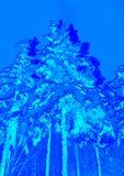 Zima krajobraz z jaskrawymi błękitnymi kolorami Drzewa i choinki zakrywający z śniegiem ilustracji