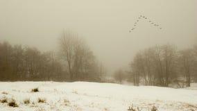 Zima krajobraz z ptakami migrującymi Fotografia Royalty Free