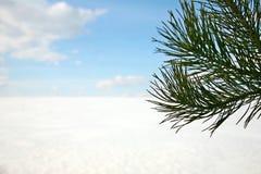 Zima krajobraz z sosnową gałąź Zdjęcie Royalty Free