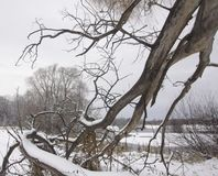 Zima krajobraz z spadać bagażnikiem stara wierzba obrazy royalty free