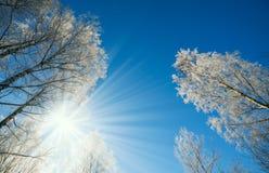 Zima krajobraz - zimy lasowa natura pod jaskrawym światłem słonecznym z mroźnymi drzewami fotografia royalty free