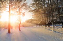 Zima krajobraz - zimy lasowa natura pod jaskrawym wieczór światłem słonecznym z mroźnymi drzewami obraz royalty free