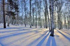 Zima krajobraz - zmierzch w brzoza gaju obraz stock