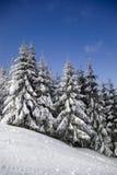 zima krajobrazowa Obrazy Royalty Free