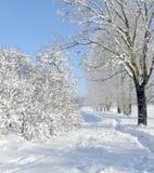 zima krajobrazowa Zdjęcia Royalty Free